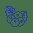 Icon Rezept Blaubeere